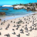 Simons-Town-Beaches